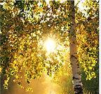 sumer trees.JPG