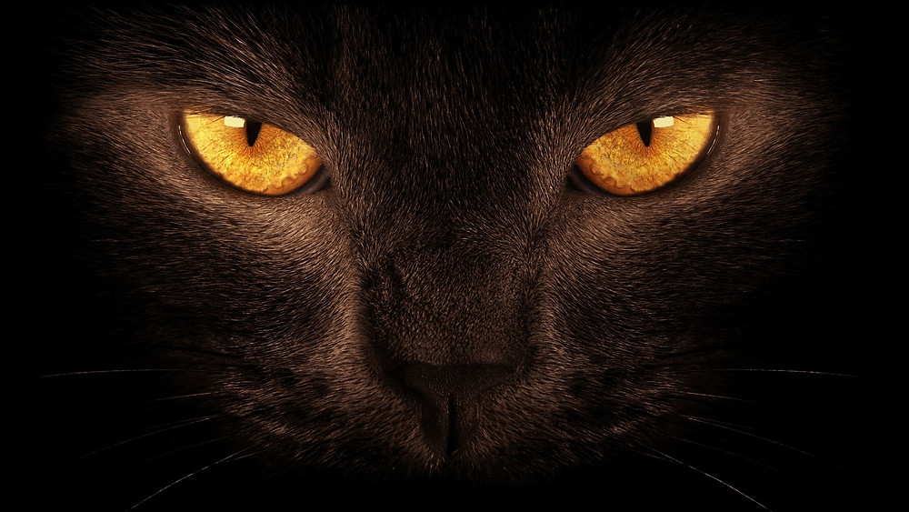 черная магия черные кошки ведьмы
