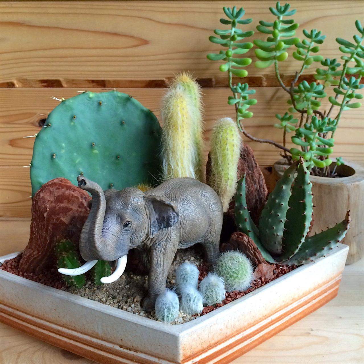 Elephant in Cactus