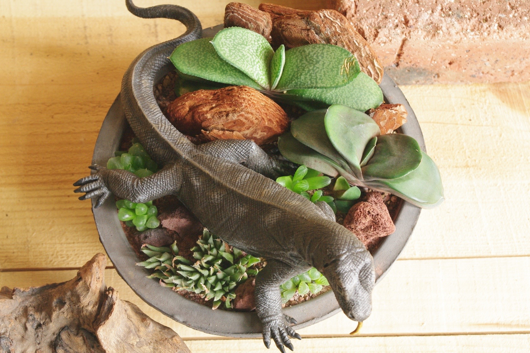 Komodo dragon in African Plants