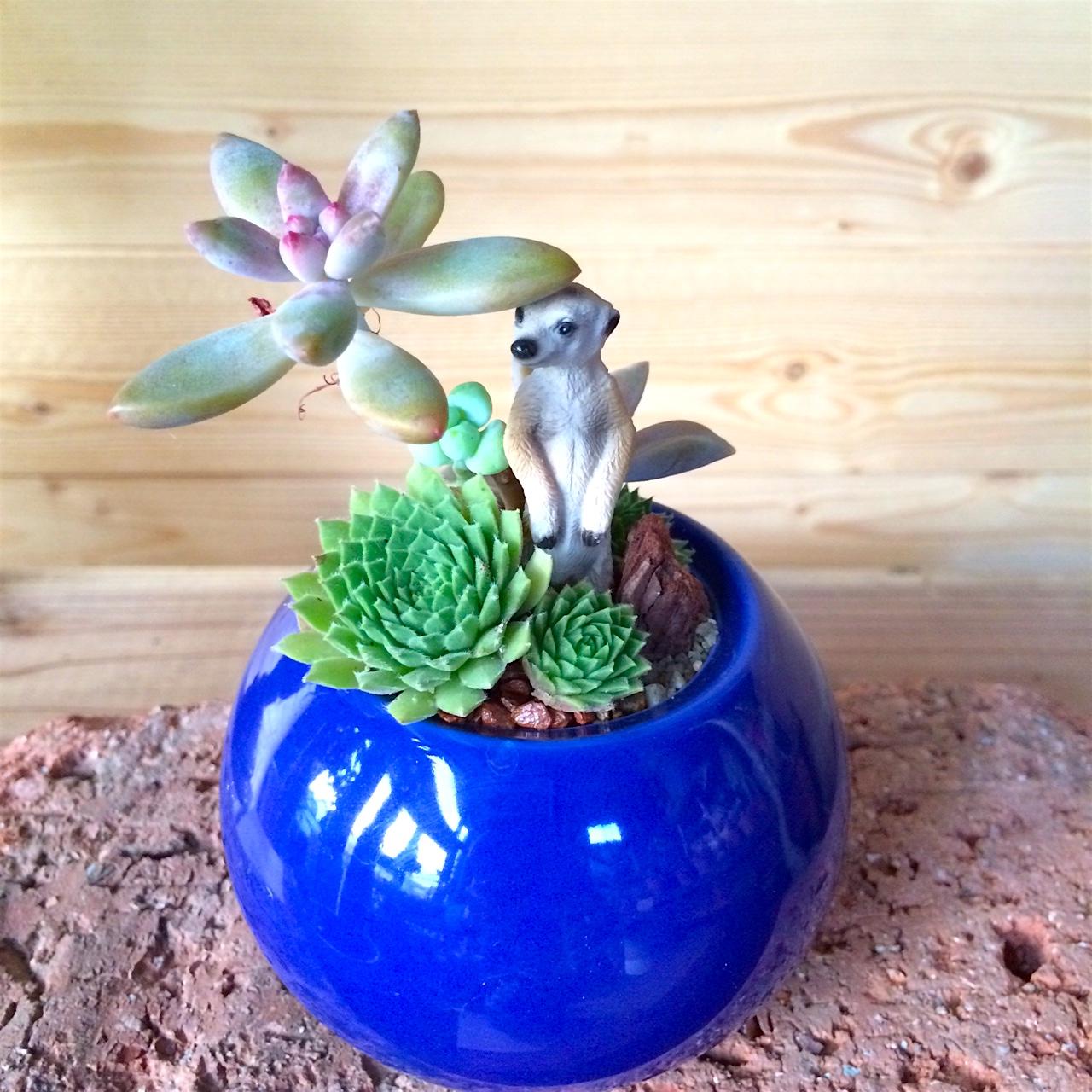 Baby Arrangement Meerkat