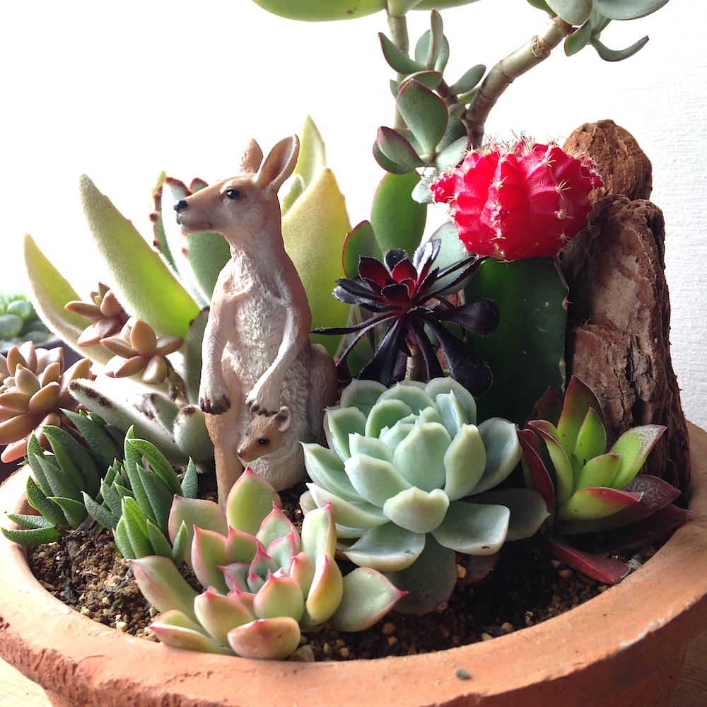 Succulents Arrangement