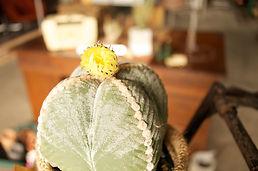 多肉植物サボテン,観葉植物の通販ショップ,モンキーツリー