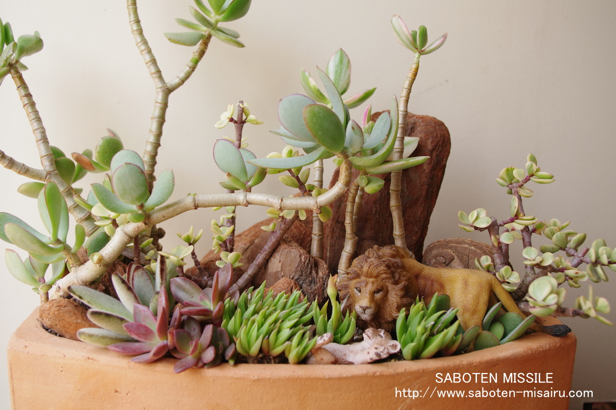 Lion family in Succulents
