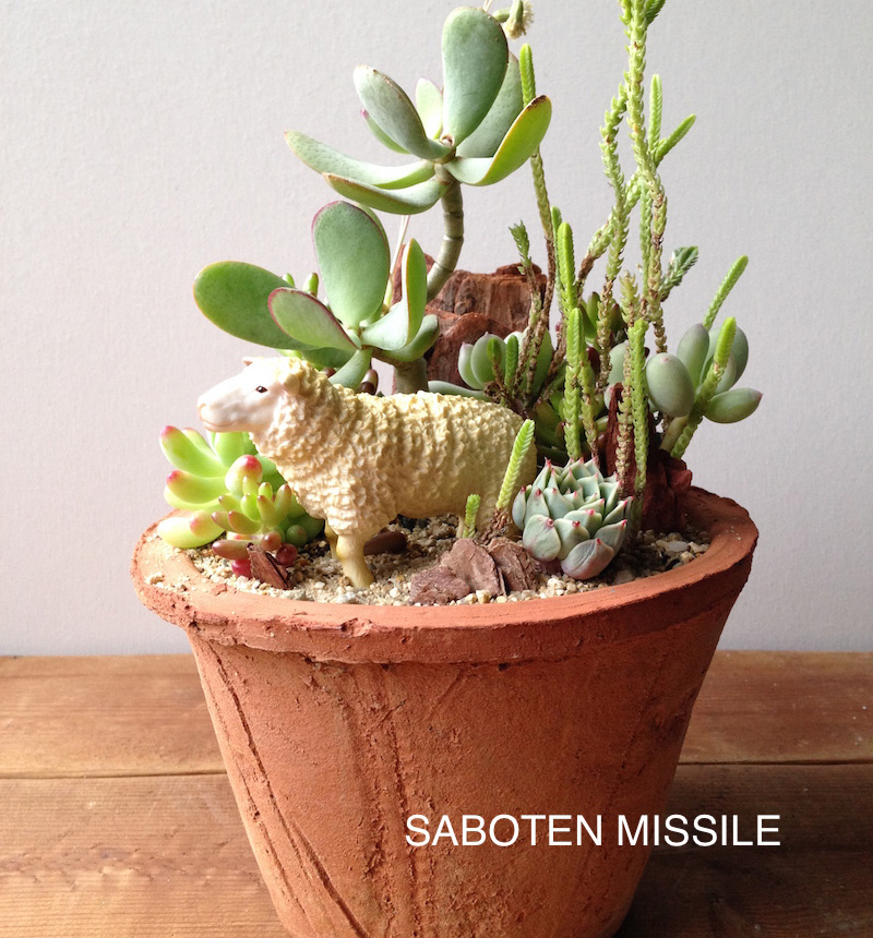 "Animal Arrange""Sheep in Succulents"""