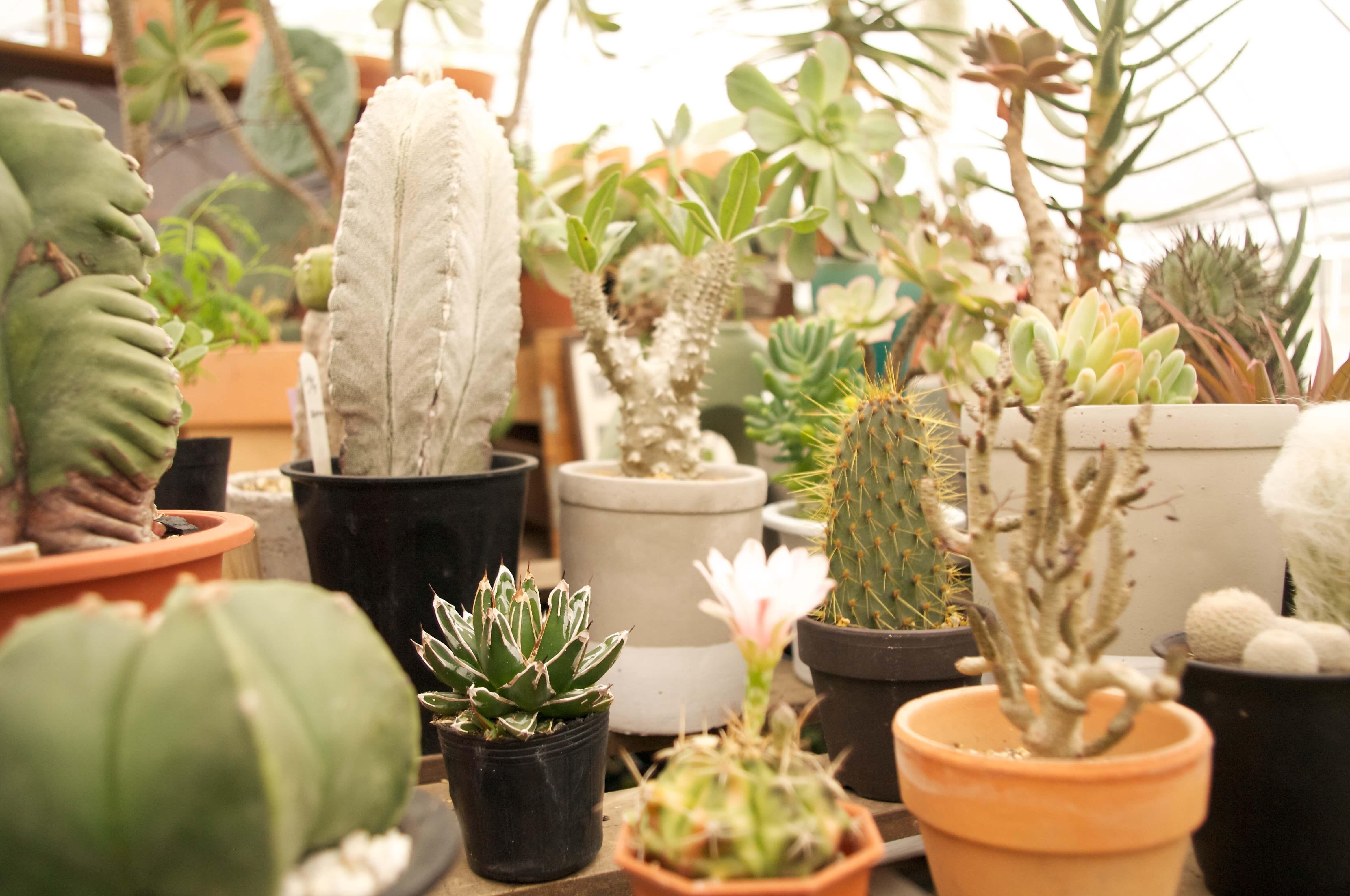 サボテンや多肉植物、観葉植物ショップ.jpg