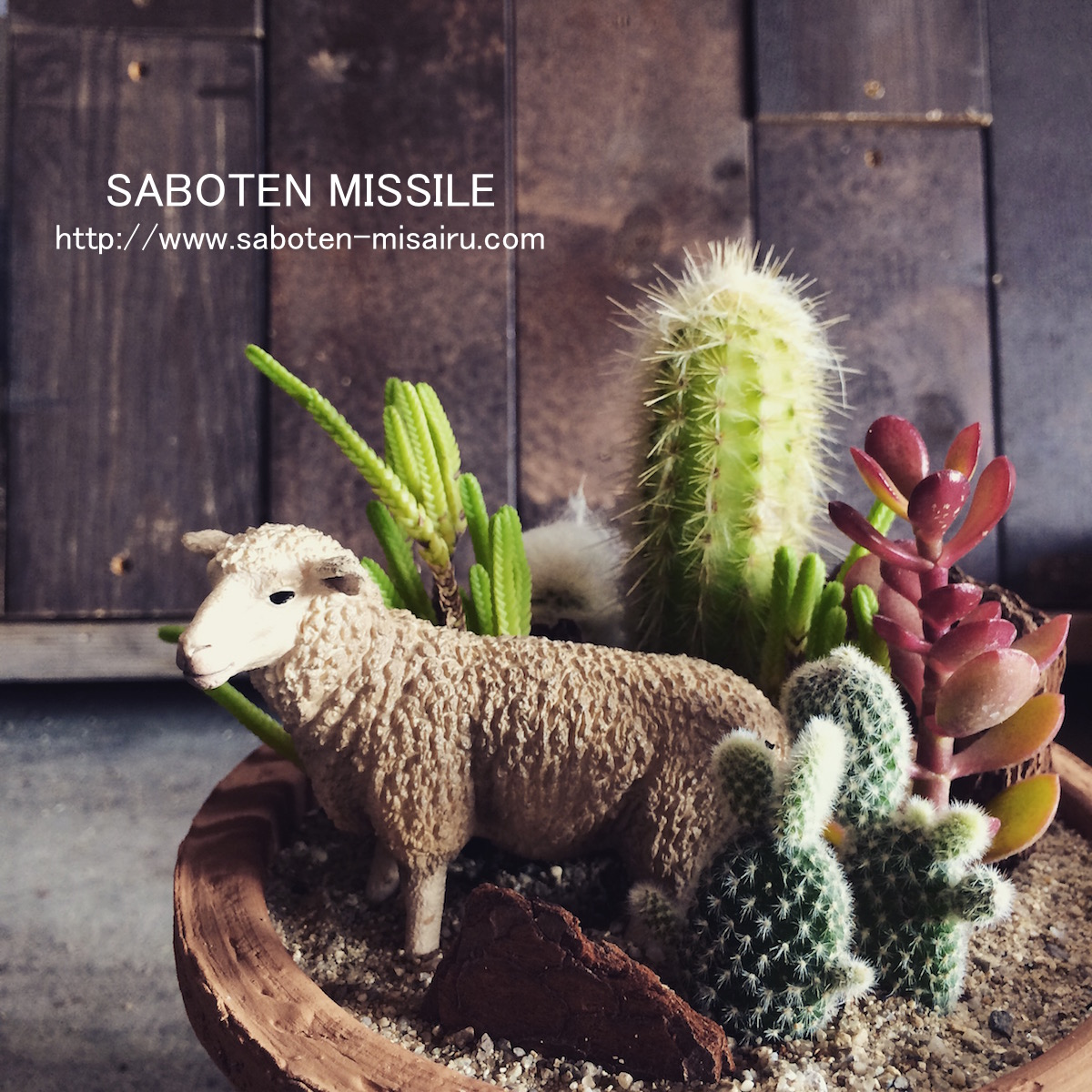 Merino Sheep in cactus
