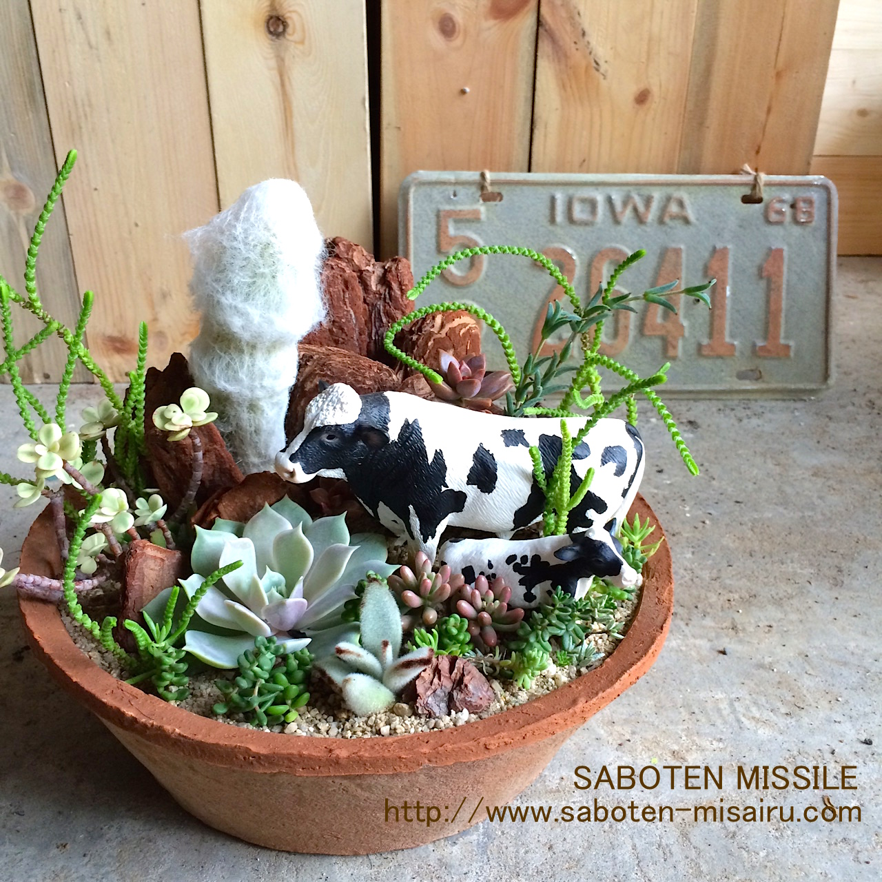 Cow family in Succulents