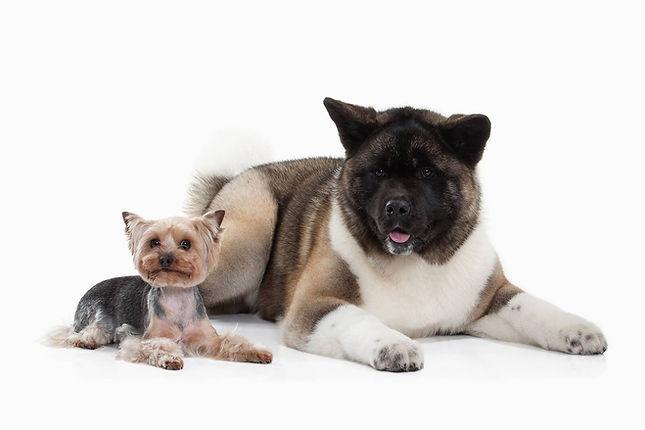 Pets that use immunovet