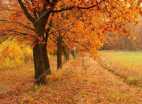 depositphotos_2731516-stock-photo-autumn