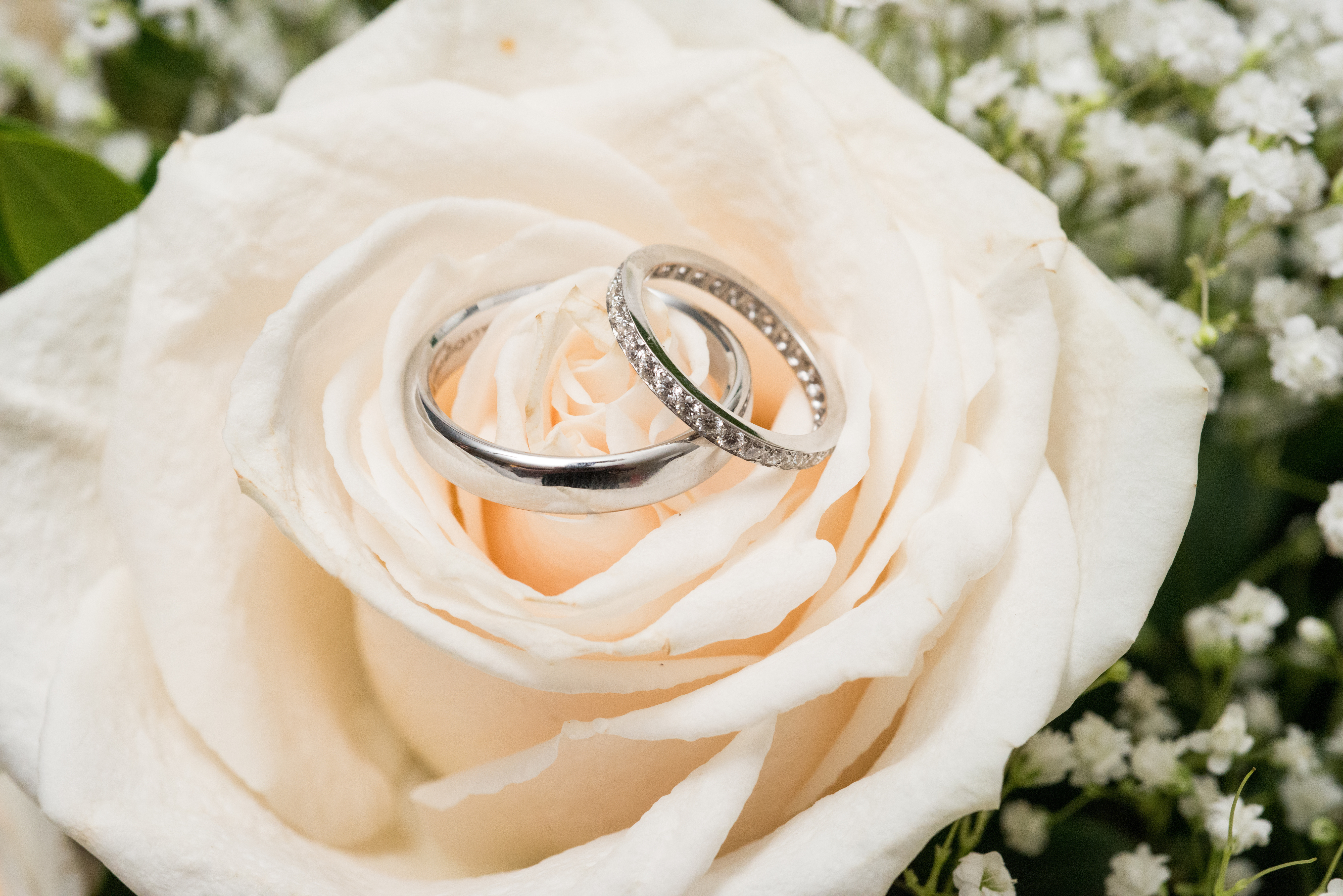 Rings on a Rose