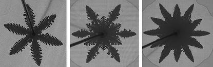 Dendritic.jpg