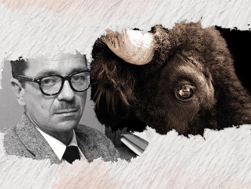 Relação amorosa entre homem e animal em BUTCHER'S CROSSING