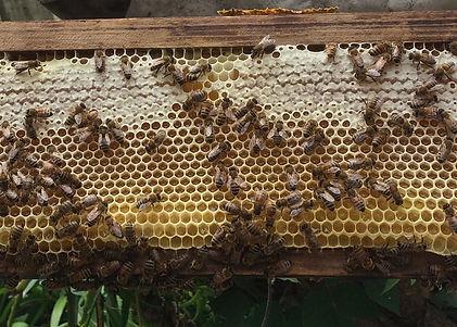 Honeycomb Crop.jpg