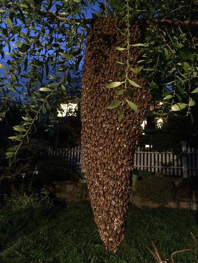 Swarm March 20 2020.jpg