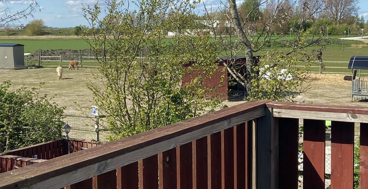 Från Alpackasvitens balkong har man utsikt över alpackahagen.
