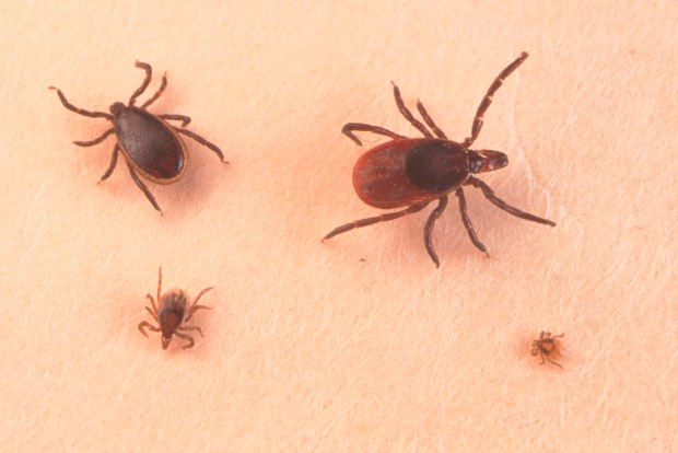 "New Reports of ""the Next Tick-Borne Plague"", Powassan Virus, are Getting Attention"