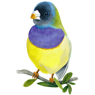 Bird With Yellow Chest.jpg