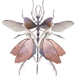 Anisoptera.jpg