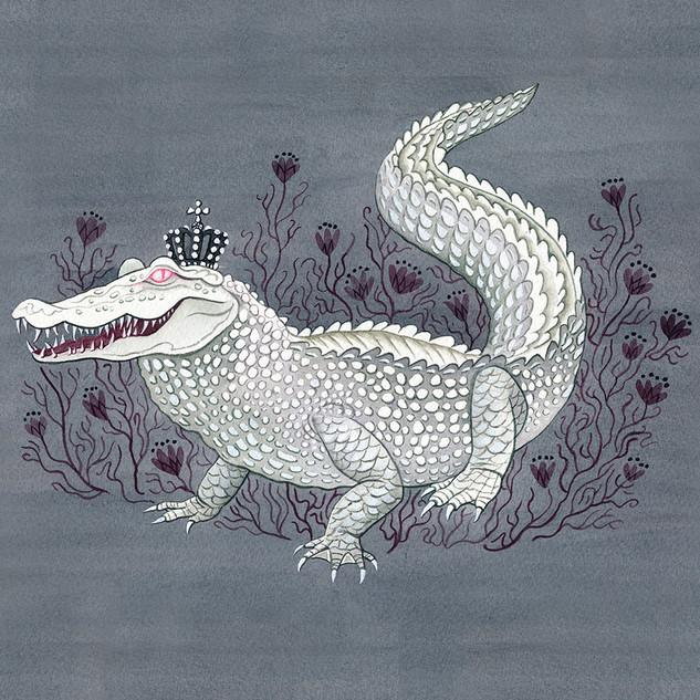 Albino Aligator.jpg
