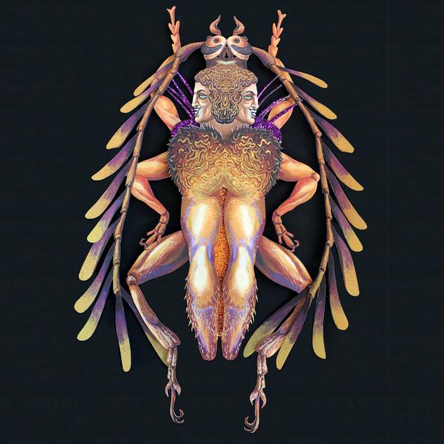 Piesarthrius Marginellus.jpg