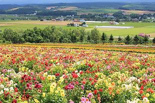 flower-land-gallery-daria.jpg
