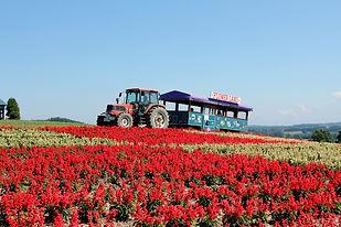 flower-land-gallery-sarubia.jpg