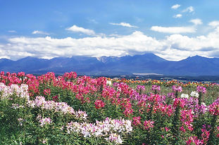 flower-land-gallery-kureome.jpg