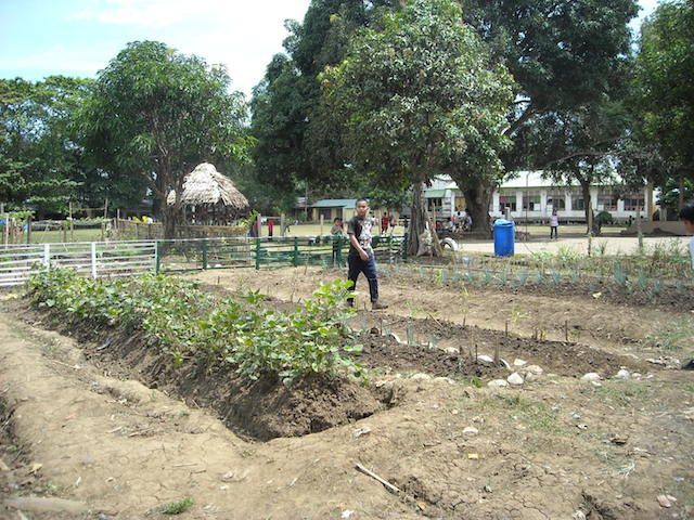 Catalunan Grande vegetable garden