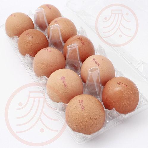 Pasteurized Shell Egg(10pcs/tray)