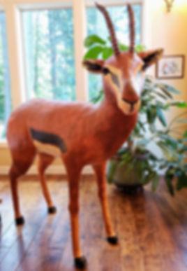 Solo Antelope 20180707_113055.jpg