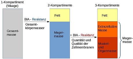 Drei-Kompartiment-Modell.jpg