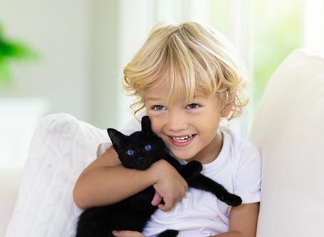 Les chats noirs, portent-ils malheur ?