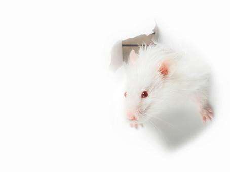 Le Rat : guide pratique