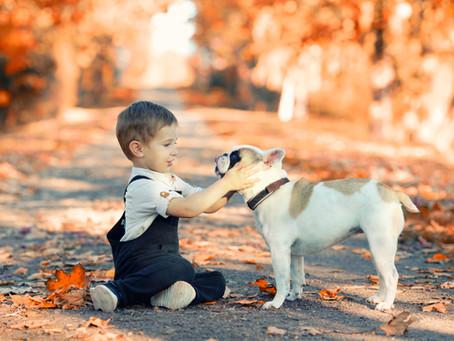 Promener son chien en automne sans risque !