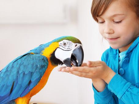 Avoir des oiseaux en captivité