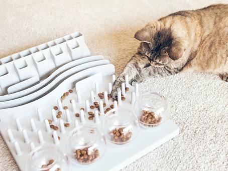 Connaissez – vous les jeux d'intelligence pour chiens et chats ?