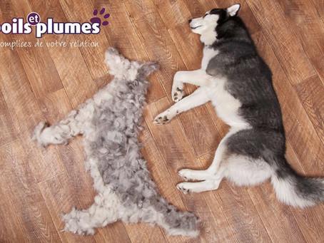 Aujourd'hui, zoom sur la mue de votre chien !