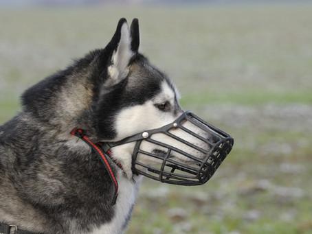 Les muselières, sont-elles réservées aux chiens dangereux ou méchants ?