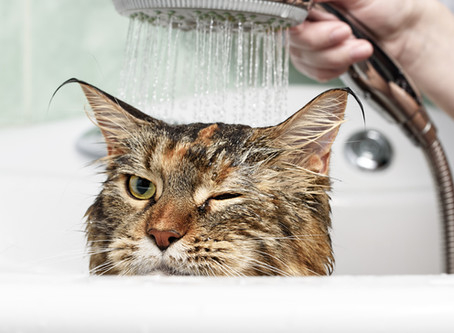 """Aujourd'hui, zoom sur l'expression : """"chat échaudé craint l'eau froide""""."""