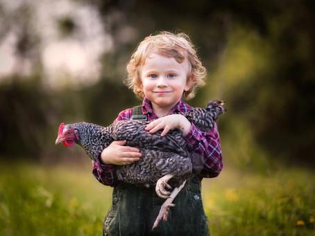 C'est décidé, j'adopte une poule !