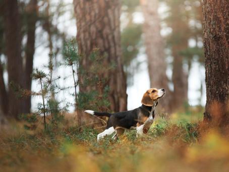 Votre chien est un petit fugueur ?