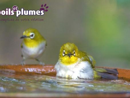 Comment aider les oiseaux pendant l'été ?