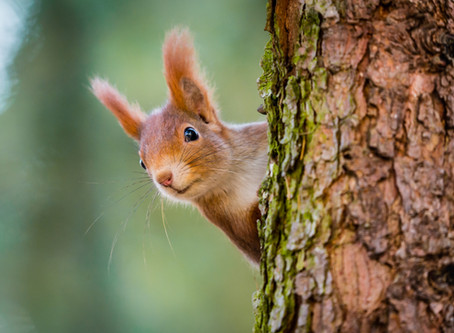 Aujourd'hui, zoom sur l'écureuil et ses provisions !