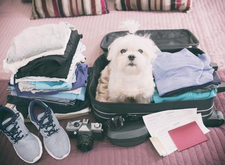 Pendant les vacances, quelles solutions pour mon petit compagnon ?