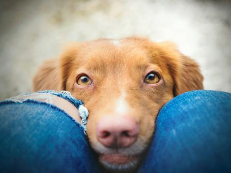 Le monde animal... des infos pas banales : le regard craquant du chien.