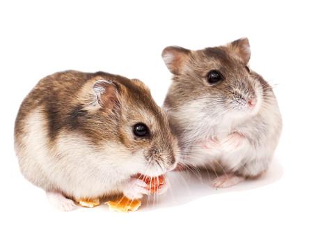 Le Hamster - Guide pratique