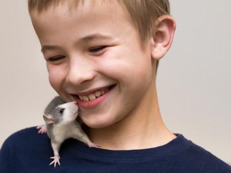 C'est décidé, j'adopte une petite souris !