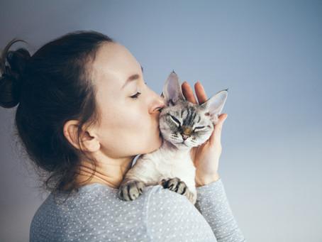 Je crois que mon amour de chat est un psychopathe.