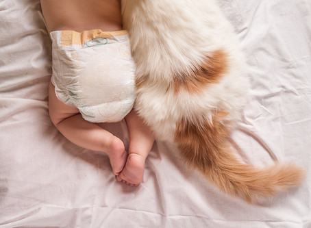 Préparer son chat à l'arrivée de votre nouveau-né.